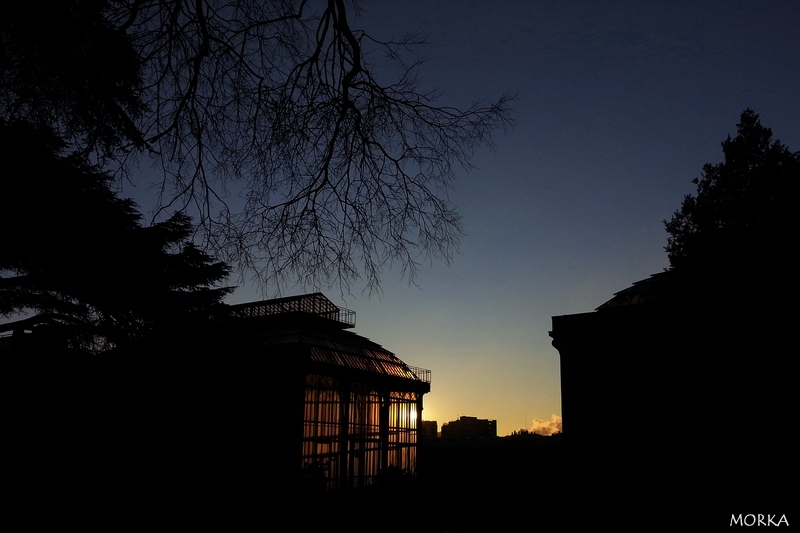 Sunrise in Paris (Jardin des Plantes)